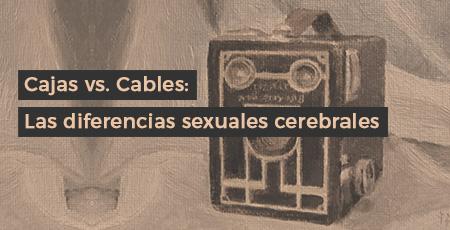 Cajas vs. Cables: Las diferencias sexuales cerebrales